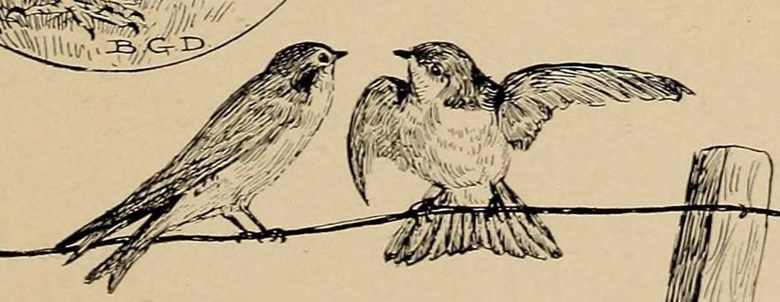 bird-poetry.png
