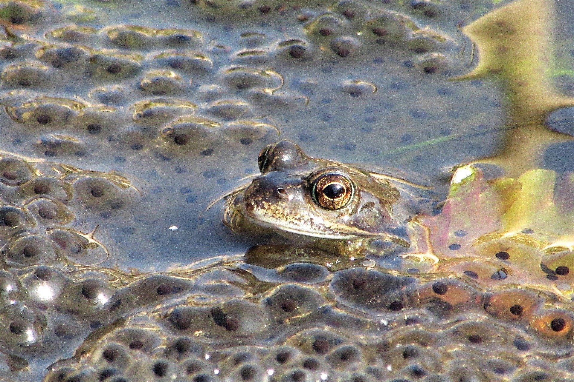 frog-4100874_1920.jpg