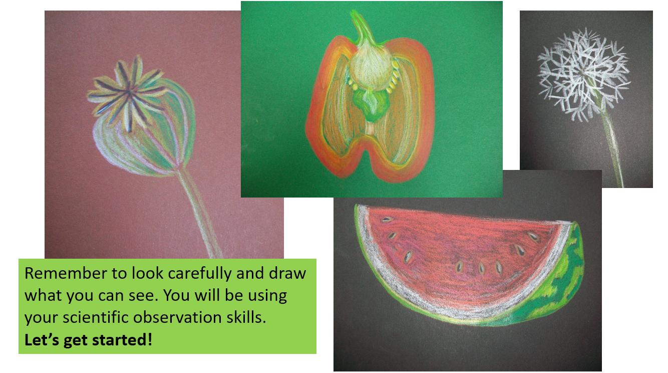 fruit-drawings.PNG
