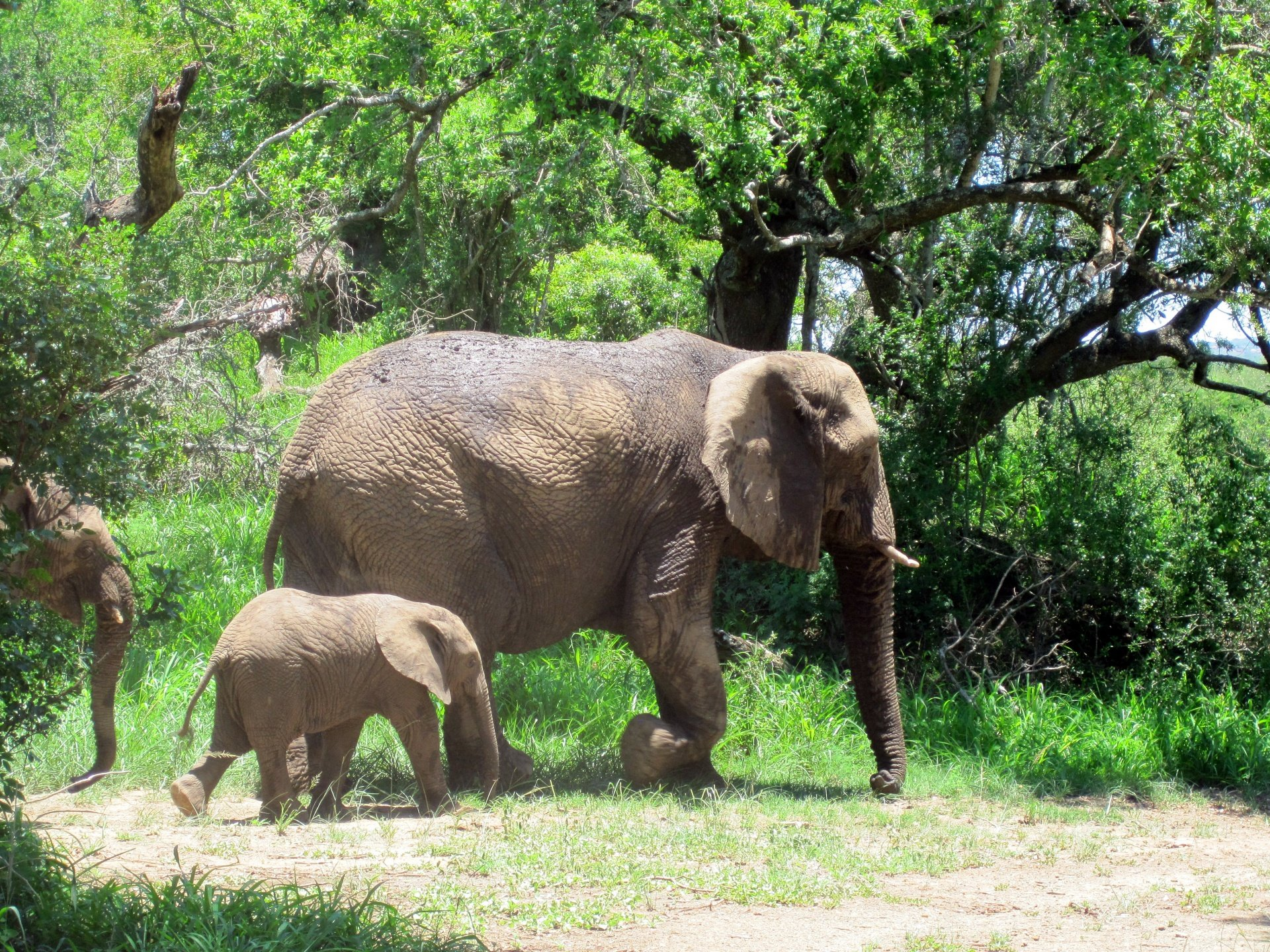mom-and-baby-elephant.jpg